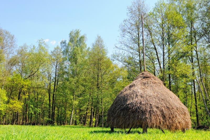 在勃兰登堡德国开化Spreewald森林风景  免版税库存图片