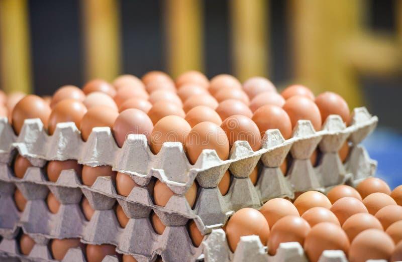 在包装在从养鸡场的盘子的箱子新鲜的鸡蛋的鸡蛋 免版税库存图片