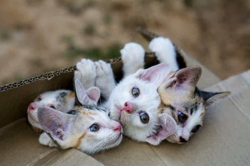 在包装纸箱子的逗人喜爱的小家养的小猫猫 库存图片