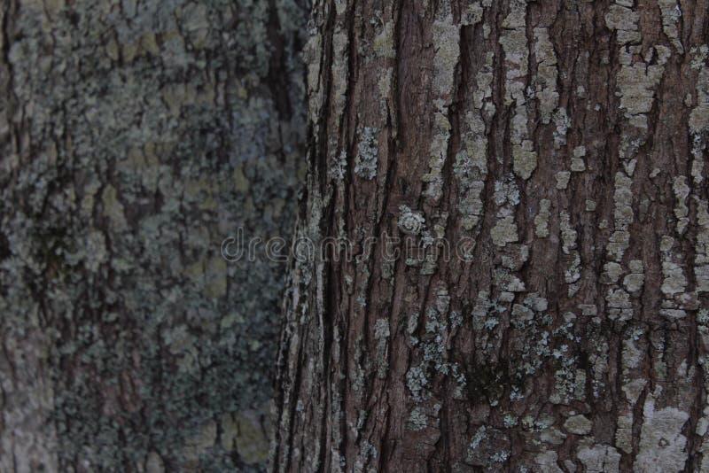 在北卡罗来纳种植园的树皮 图库摄影