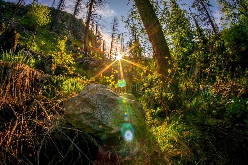 在北方针叶林森林Barguzin自然保护的日出与石头和杉木 库存图片