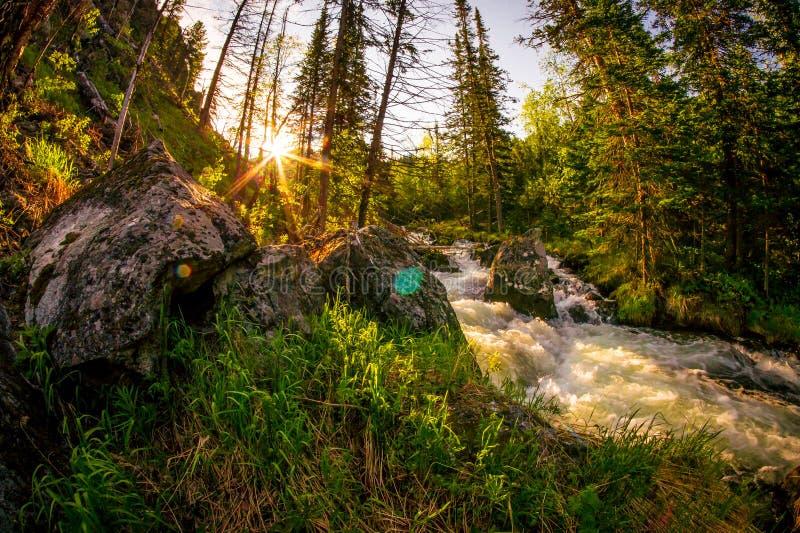 在北方针叶林森林Barguzin自然保护的日出与迅速山河和石头 库存照片