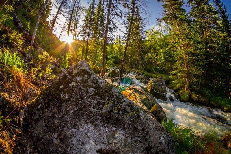 在北方针叶林森林Barguzin自然保护的日出与迅速山河和石头 免版税库存照片