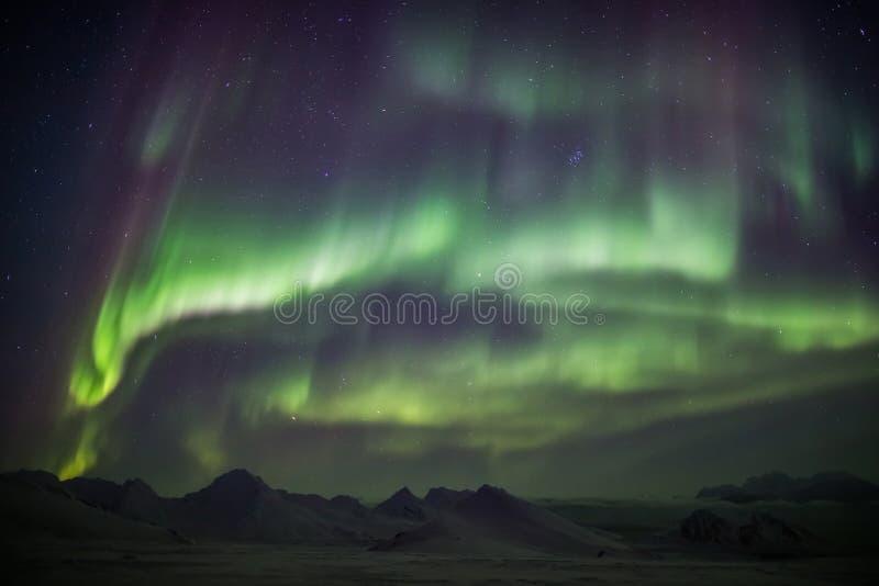 在北极天空-斯瓦尔巴特群岛的北极光 免版税库存图片