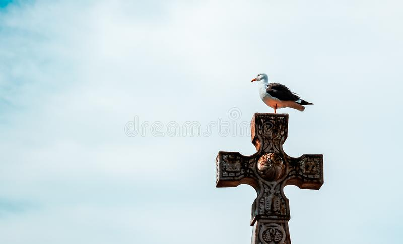 在十字架栖息的海鸥 图库摄影