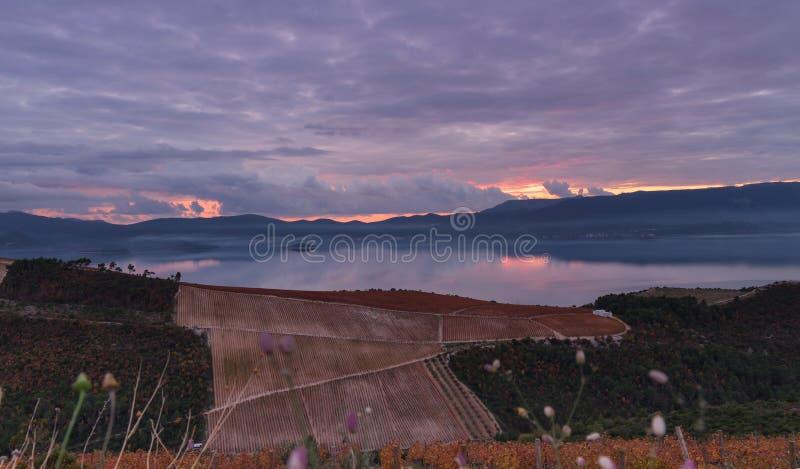 在半岛Peljesac和葡萄园3的日落 免版税库存图片