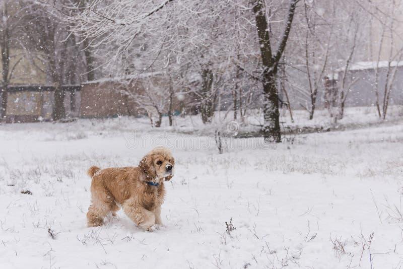 在单独冬天森林的逗人喜爱的狗宠物步行 库存照片