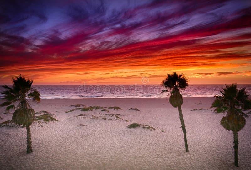 在南加州海滩的生动的日落与棕榈树 库存照片