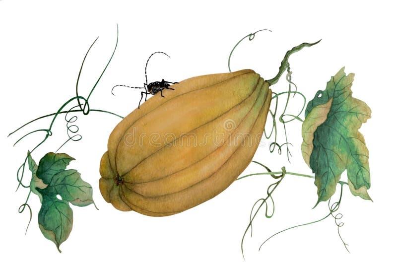 在南瓜的大甲虫 向量例证