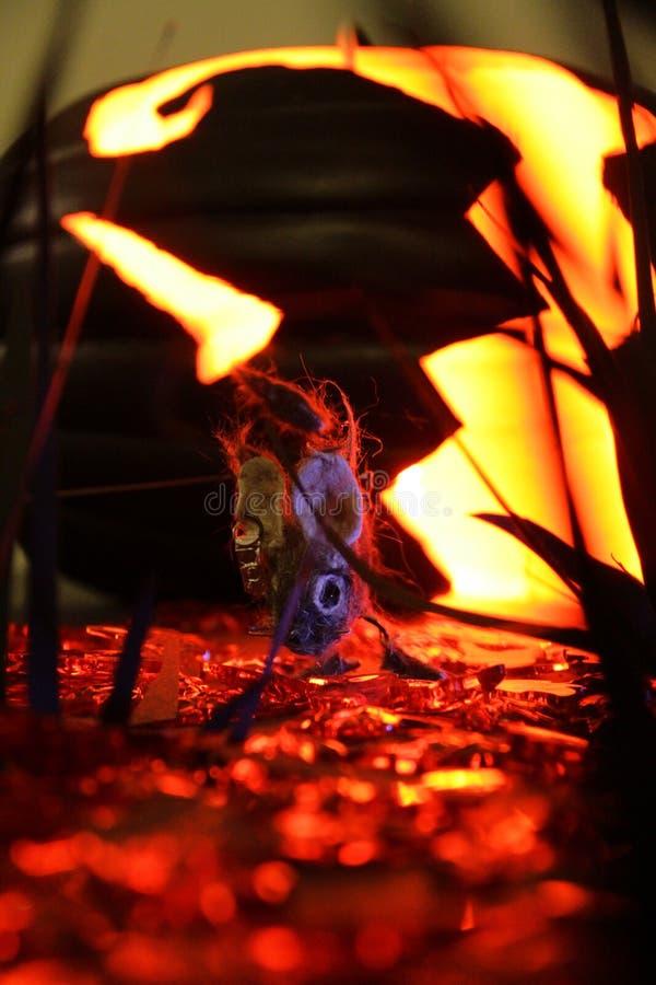 在南瓜补丁的啮齿目动物 免版税库存图片
