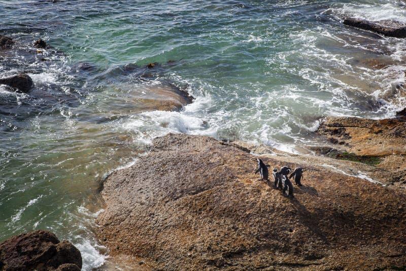 在南非的岸的非洲企鹅 免版税库存图片