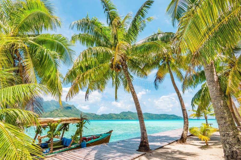 在博拉博拉岛海岛上的可可椰子树 库存图片
