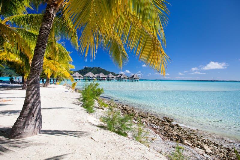 在博拉博拉岛的惊人的海滩 免版税图库摄影