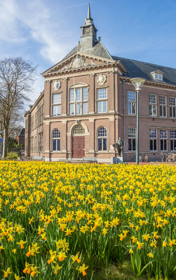 在博物馆前面的水仙花在芬丹 库存照片