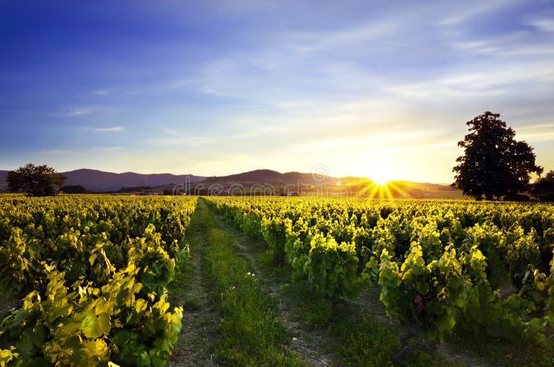 在博若莱红葡萄酒,法国葡萄园和moutains的日落  库存照片