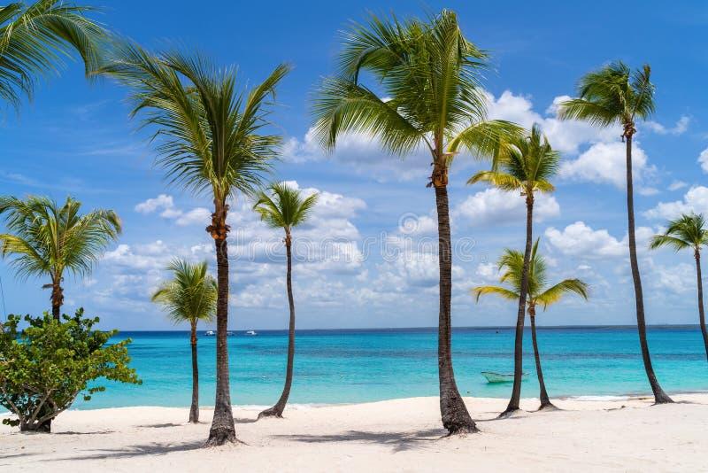 在卡塔利娜海岛的棕榈树在多米尼加共和国 图库摄影