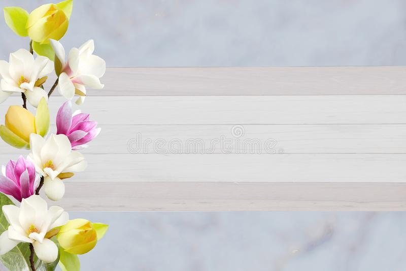 在卡片的纸背景隔绝的美丽的开花的木兰花 免版税图库摄影
