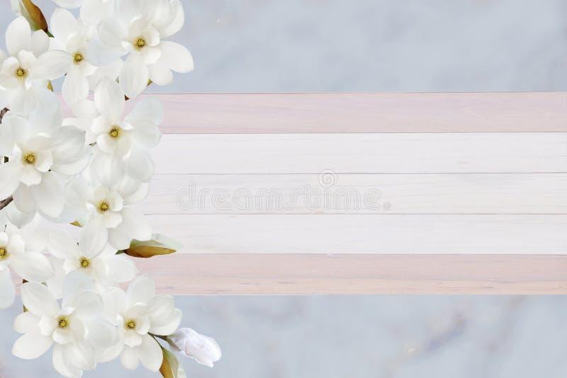 在卡片的纸背景隔绝的美丽的开花的木兰花 库存照片
