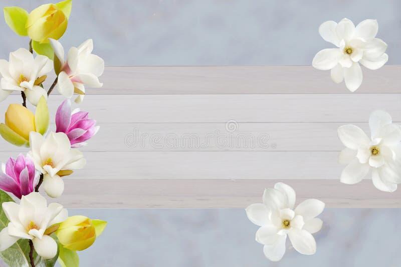 在卡片的纸背景隔绝的美丽的开花的木兰花 免版税库存照片