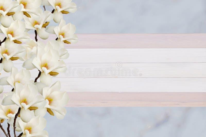 在卡片的纸背景隔绝的美丽的开花的木兰花 库存图片
