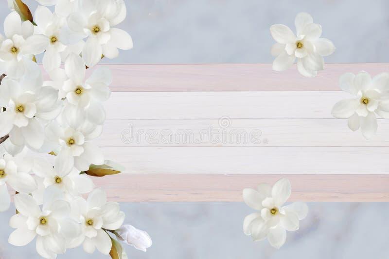 在卡片的纸背景隔绝的美丽的开花的木兰花 免版税库存图片