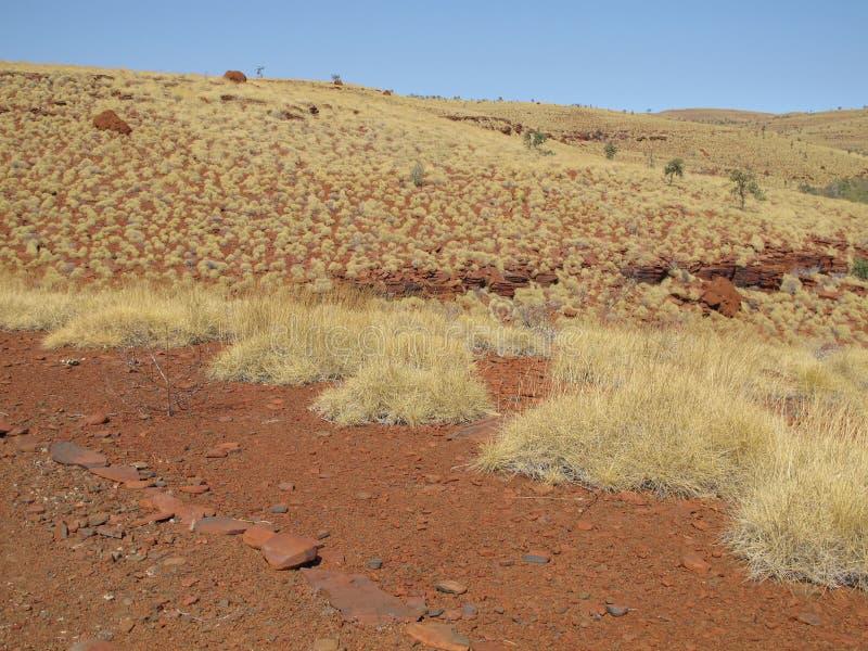 在卡瑞吉尼国家公园,西澳州附近的登上布鲁斯 图库摄影