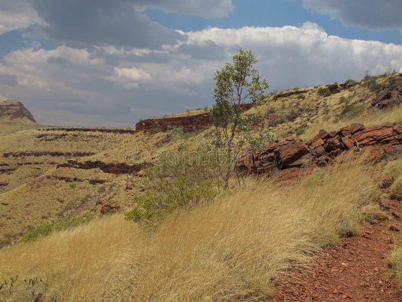 在卡瑞吉尼国家公园,西澳州附近的登上布鲁斯 免版税图库摄影