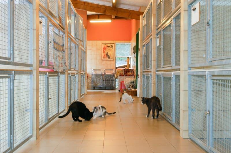 在卢加诺动物庇护所的猫瑞士的 库存照片