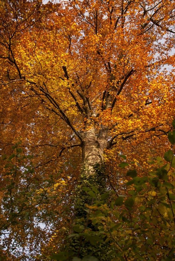 在卢森堡的秋天树 库存图片