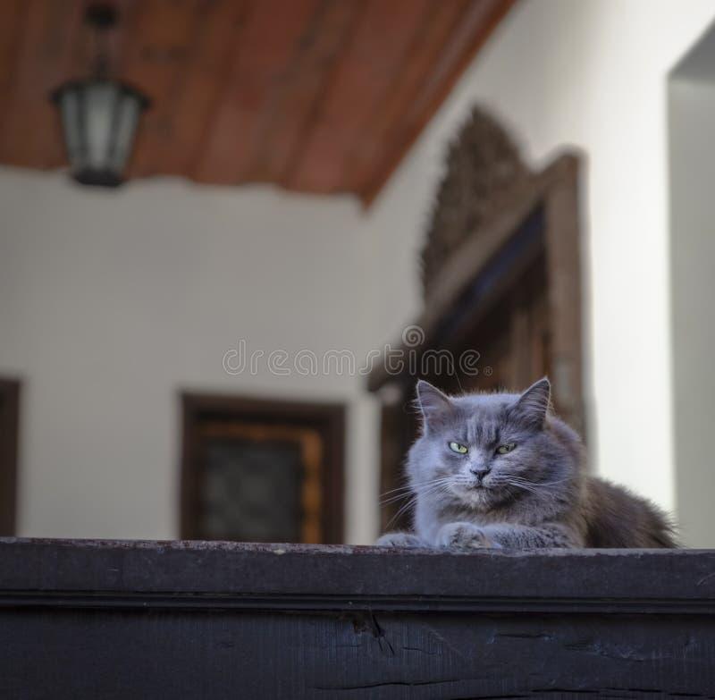 在卫兵的常驻猫 免版税图库摄影