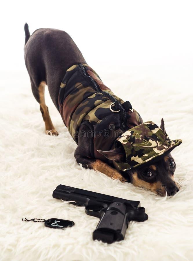 在卫兵的特攻队狗 库存照片
