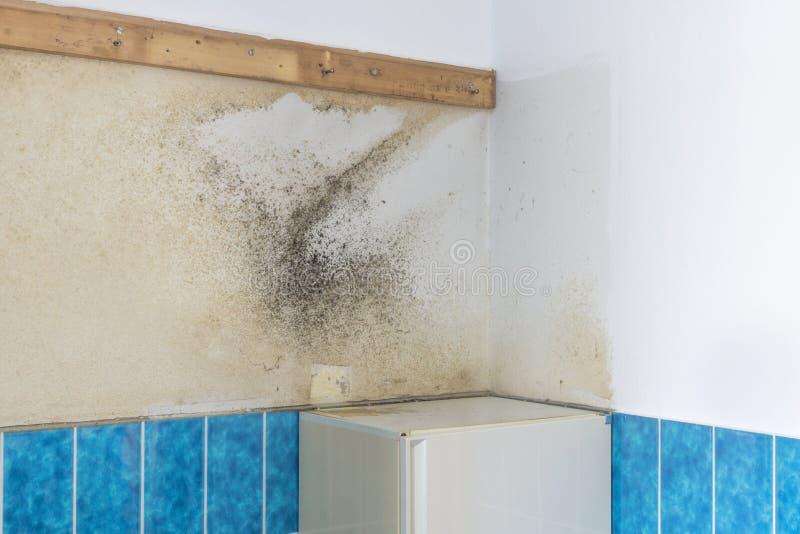 在卫生间墙壁上的发霉的霉 免版税库存照片