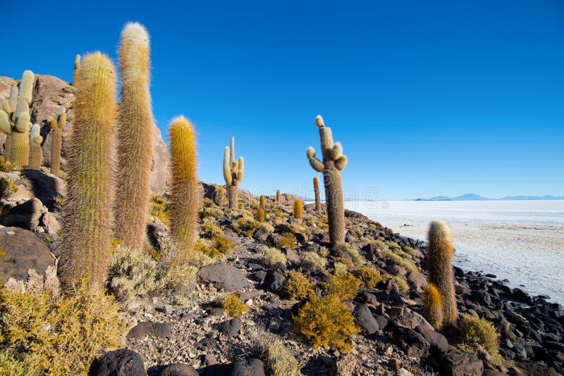 在印加瓦西峰海岛上的仙人掌,盐溶平的撒拉族de Uyuni, Altiplano 免版税库存图片