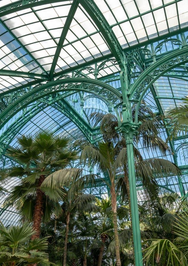 在印象深刻的冬季花园,一部分内部的蕨的皇家温室在拉埃肯,布鲁塞尔,比利时 图库摄影