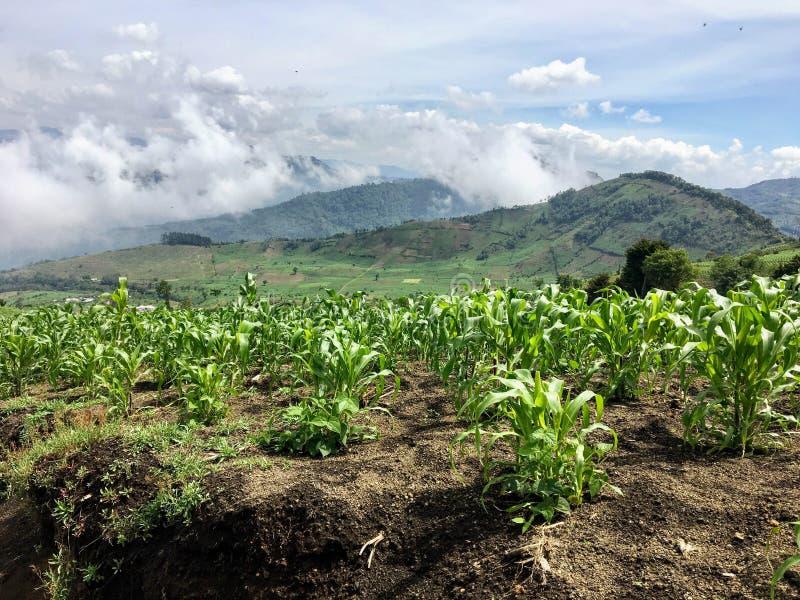 在危地马拉的小山的浩大的麦地,在反重力之外 免版税库存照片