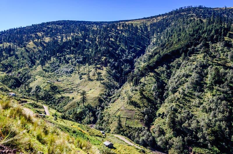 在危地马拉的高地的树木丛生的小山 免版税库存图片