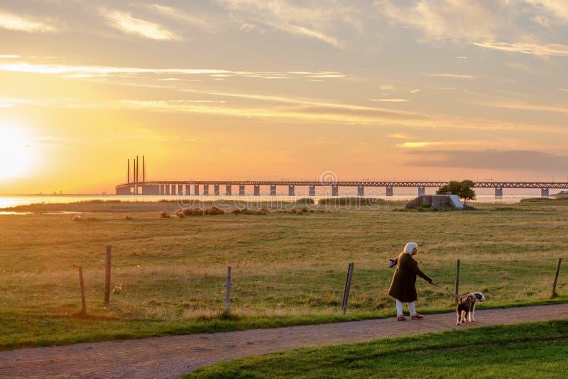在厄勒海峡桥梁的日落 库存图片