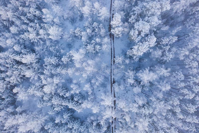 在厚实的雪盖的冬天森林 空中风景 免版税图库摄影