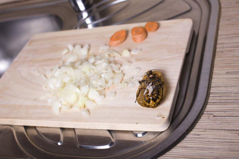 在厨房的蟑螂 库存图片