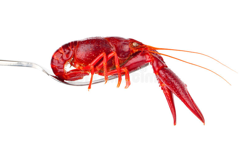 在叉子的小龙虾 免版税库存照片