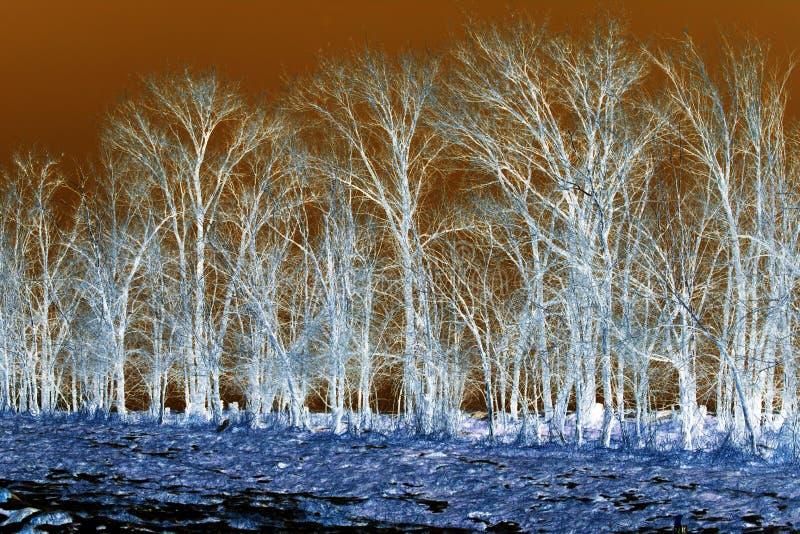 在反向的光秃的树 库存照片