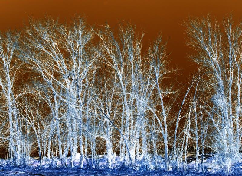 在反向的光秃的树 免版税库存图片