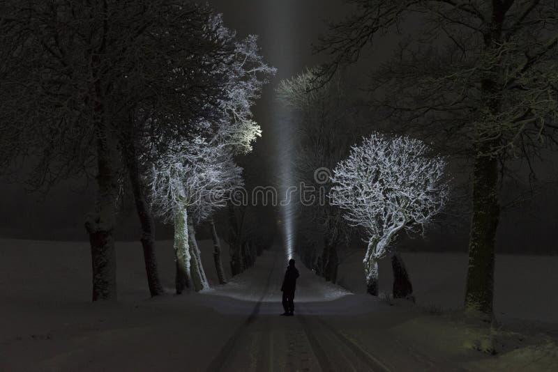 在发光与手电的树胡同的晚上供以人员身分户外 免版税库存照片