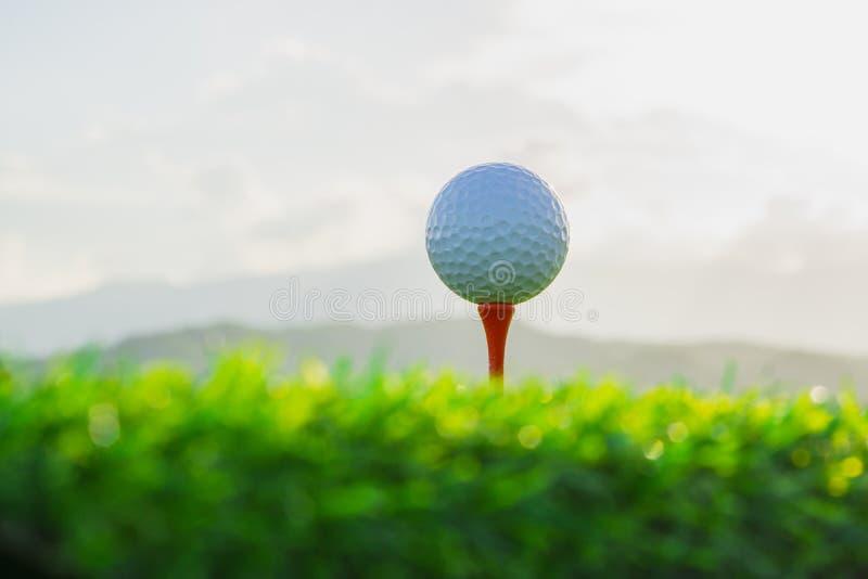 在发球区域的高尔夫球在自然背景中固定准备好使用 免版税库存图片