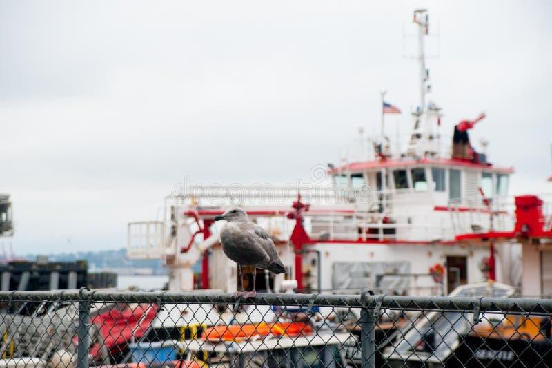 在口岸的海鸥在波特兰,美国附近 波特兰是位于俄勒冈的城市,夏时的美国,国际 免版税库存图片