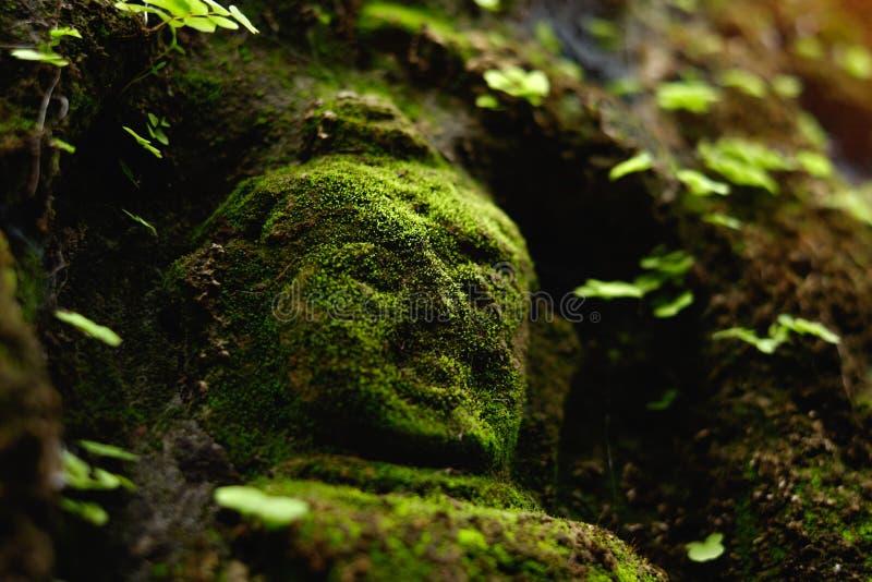 在古庙的青苔盖的菩萨雕象 库存图片