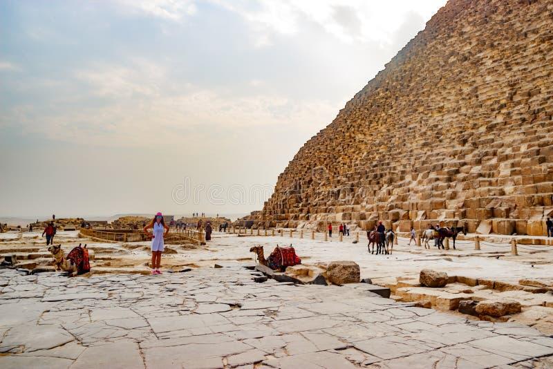 在古老金字塔附近的骆驼在开罗,埃及 免版税库存图片