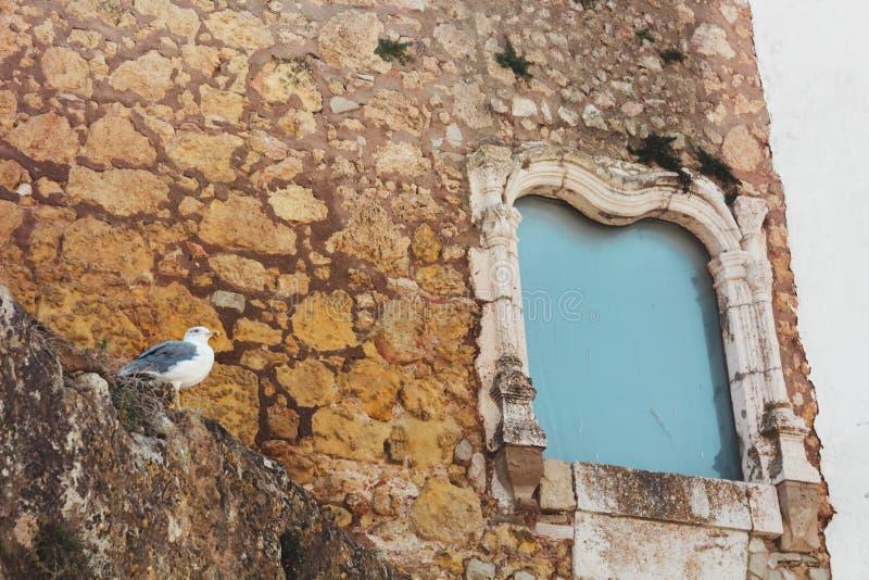 在古色古香的历史的纪念碑窗口,拉各斯,葡萄牙附近的海鸥 免版税库存照片