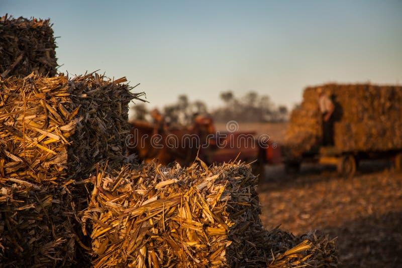 在古色古香的门诺派中的严紧派的无盖货车的被堆积的干草捆 库存图片