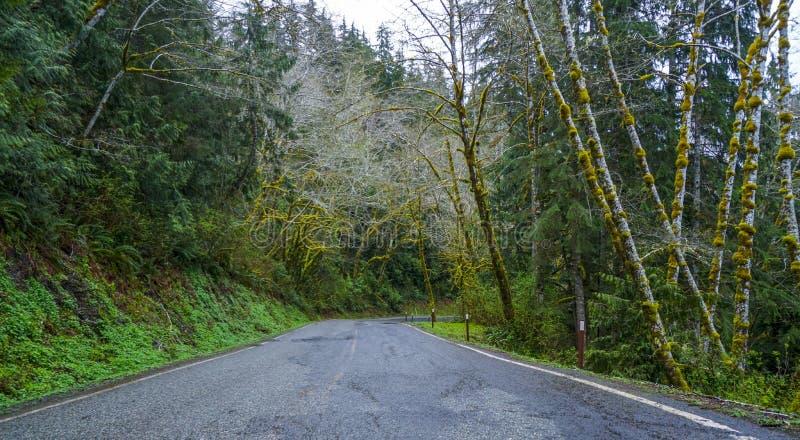 在可可西里山雨林的美妙的风景-蠕动的幻想神色-叉子-华盛顿 免版税库存图片